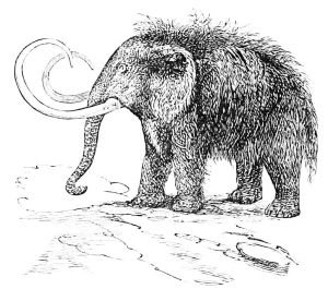 PSM_V16_D813_The_mammoth_or_hairy_elephant